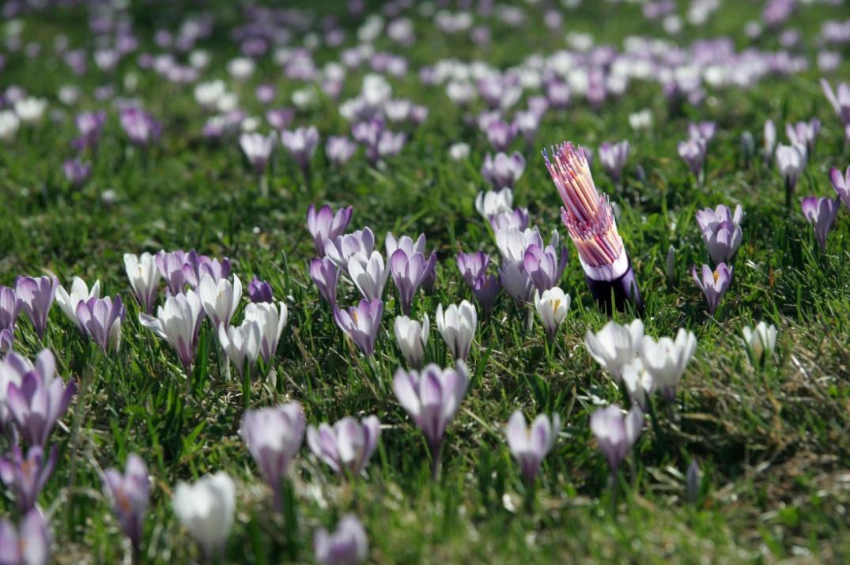 fibra_fiori
